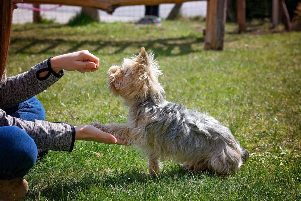 Nassau dog training experts
