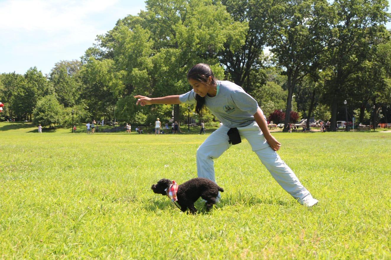 best dog training methids